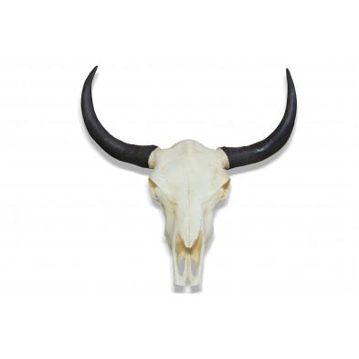 Trophée mural de 69 cm en crâne de taureau collection Leckwith